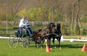 Hungary Carriage Driving